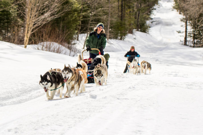 dog sledding in vermont