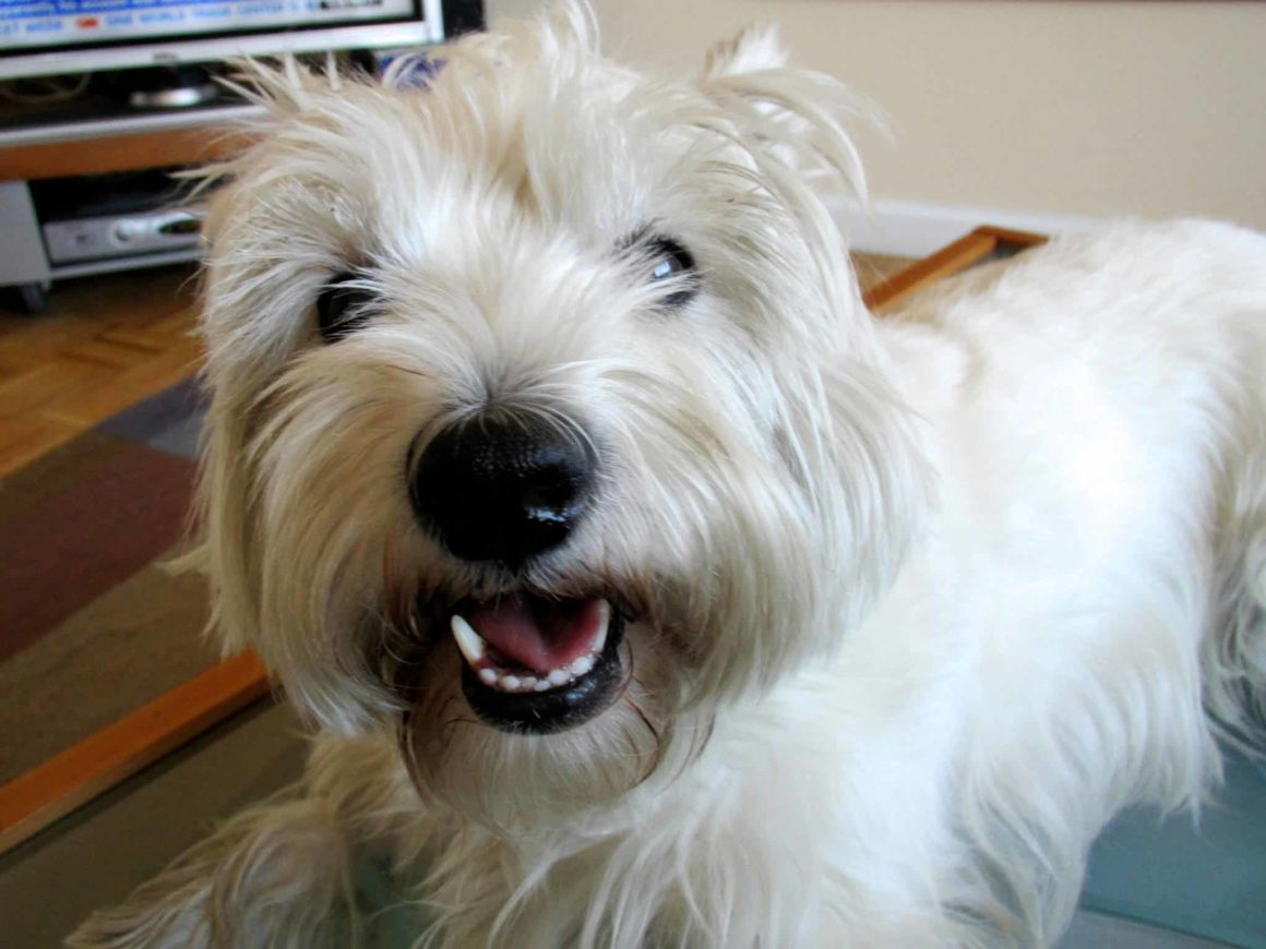 Barking! Which Dogs Bark the Most? - Urban Dog